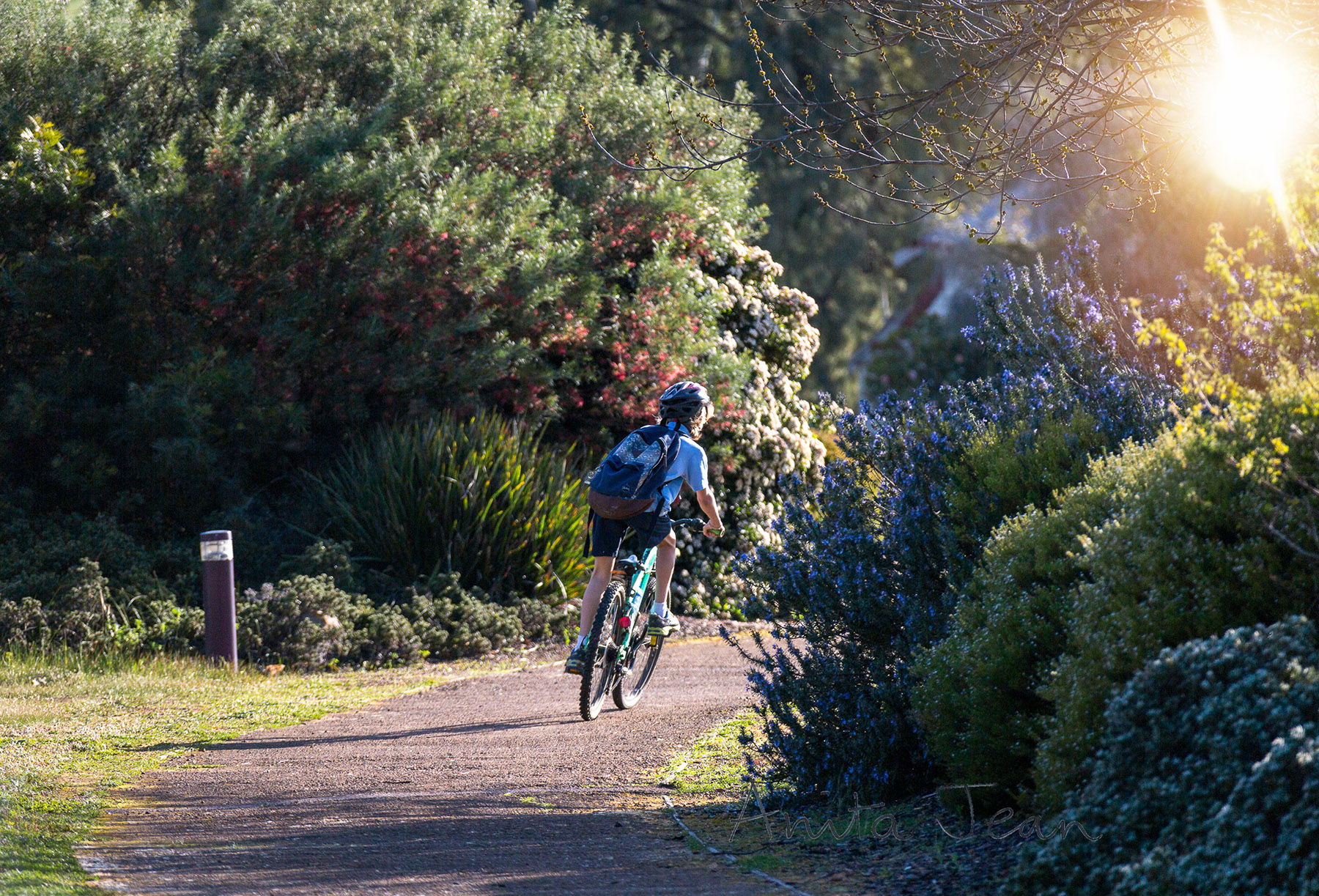 Photo of Schoolboy riding his bike to school through a park in the small town of Darkan, Western Australia. He has a helmet on his head and his backpack on his back.