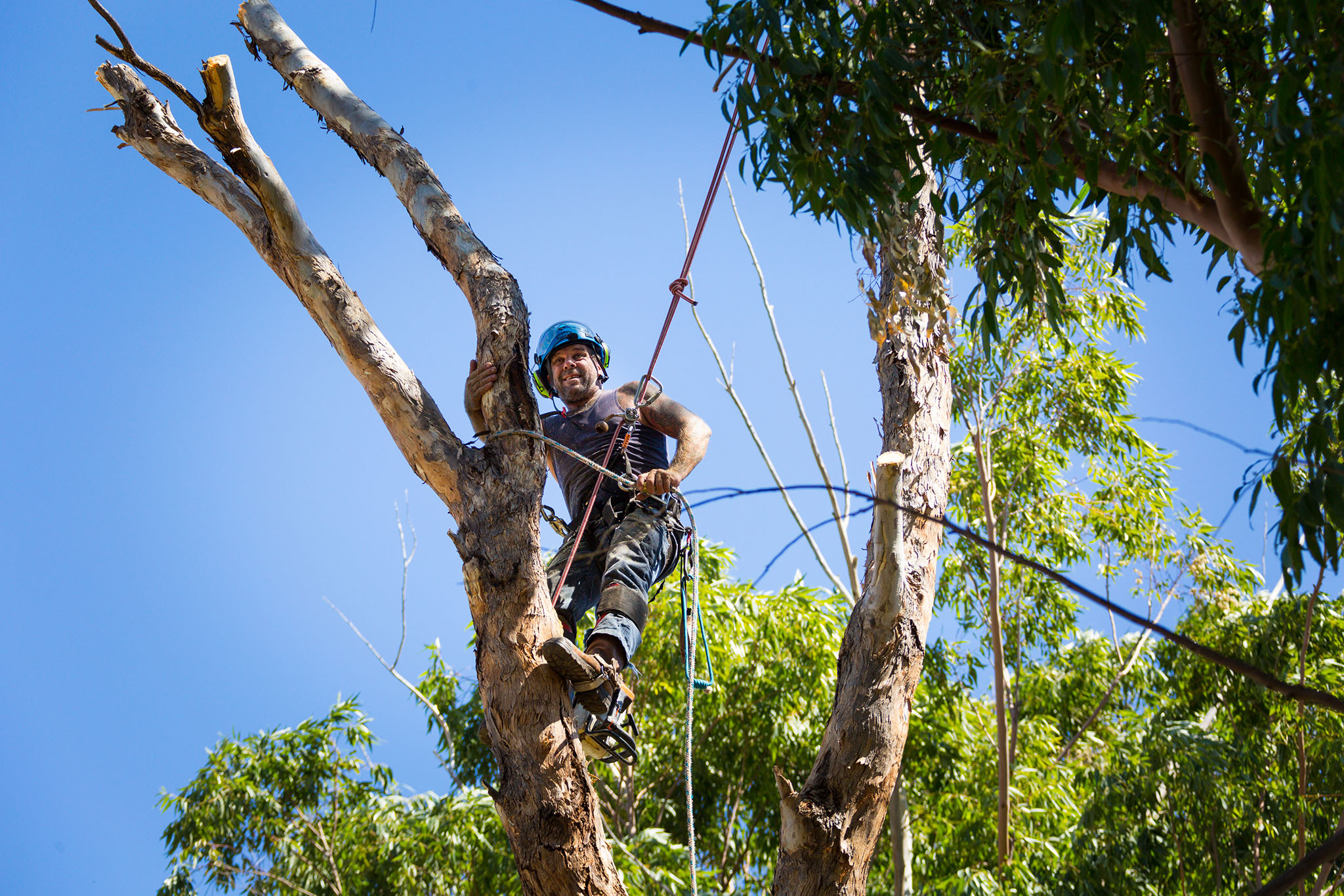Photo of tree lopper up a tree with rope and chainsaw