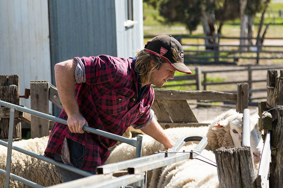 photo of young farmer in yards with sheep in the wheatbelt