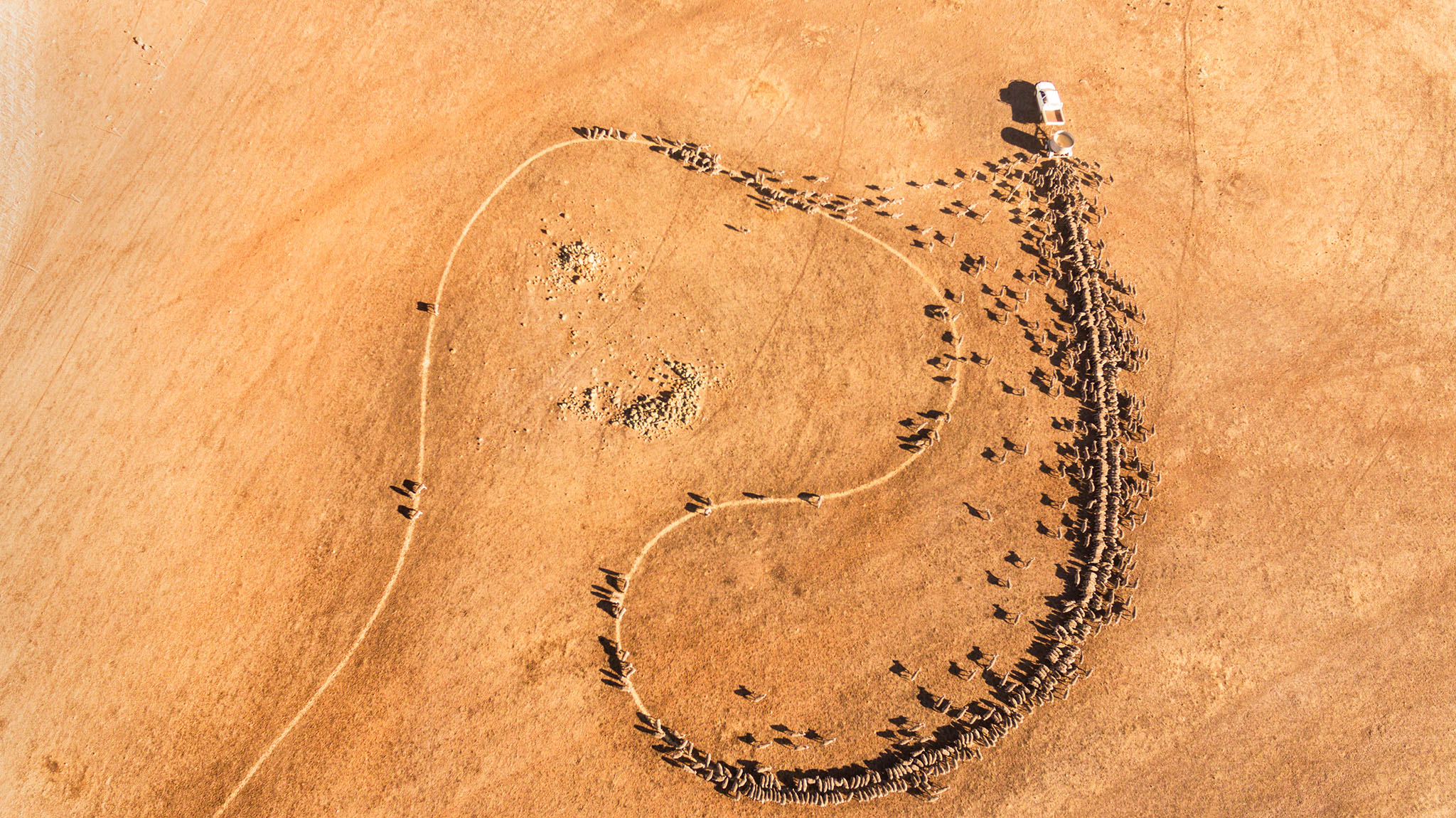 Aerial photo showing the trail of grain fed out to sheep creating a sinuous line through a dry brown landscape