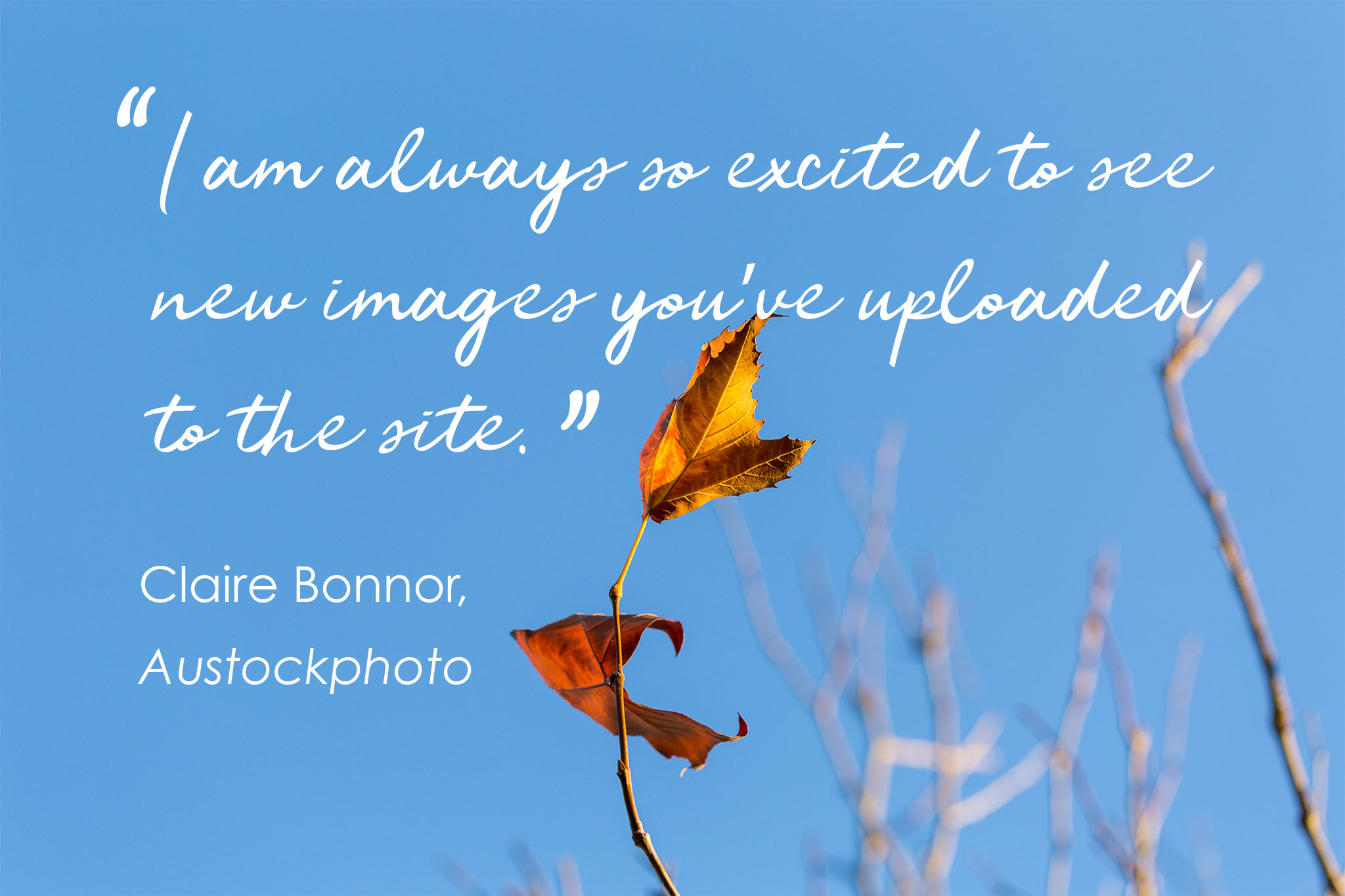 "Photo of blue sky and autumn leaves with the words: ""I am always excited to see new images you have uploaded to the site."" Claire Bonnor, Austockphoto."